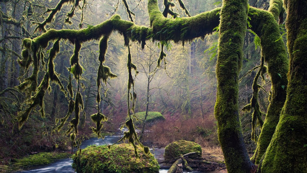 wycinka drzew wrocław